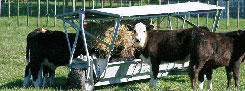 calves feeding from troughmobile
